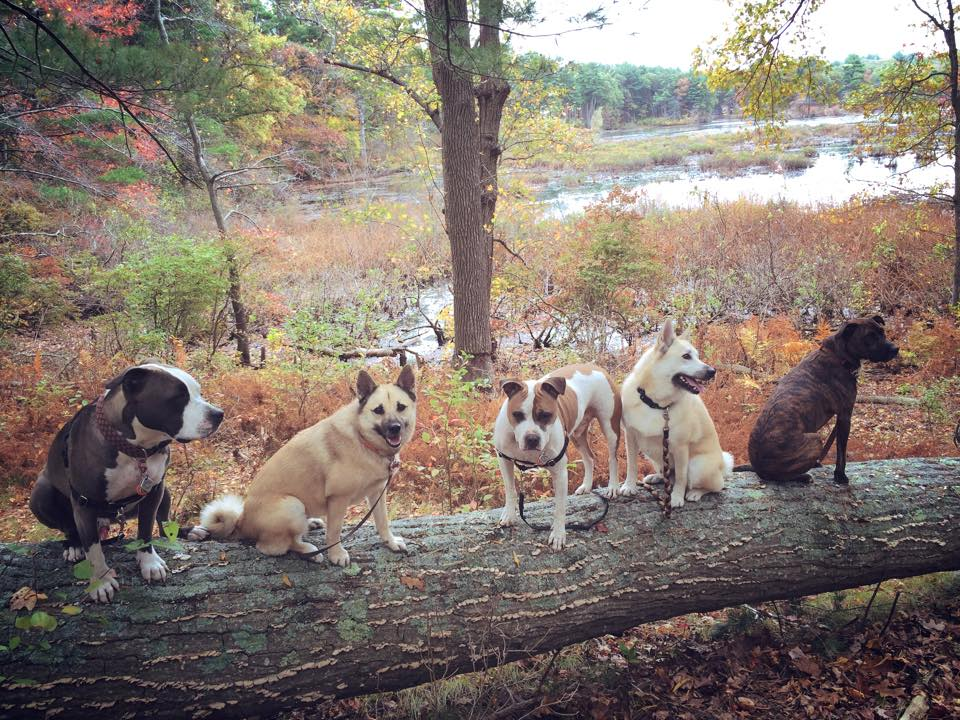 Dog Obedience Training Beverly Ma